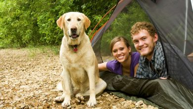 Photo of Camping With Dogs – A Complete Family Adventure