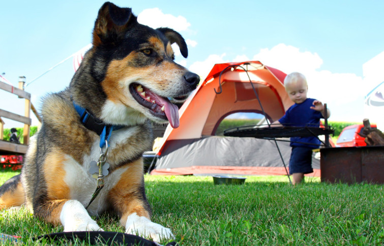 Camping With Dogs Gear
